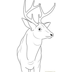 Buck Deer Free Coloring Page for Kids