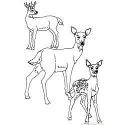 Deer Free Coloring Page for Kids