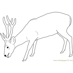 Deer Eating Free Coloring Page for Kids