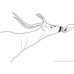 Deer Feeding Free Coloring Page for Kids