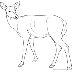 Deer Looking Back Free Coloring Page for Kids