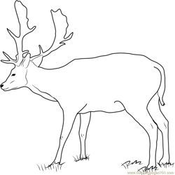 Fallow Buck Deer Free Coloring Page for Kids