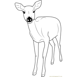 Formosan Sika Deer Free Coloring Page for Kids