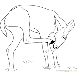 Key Deer Free Coloring Page for Kids