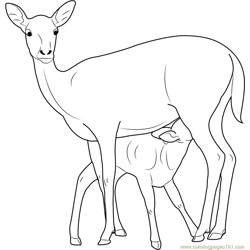 Mother and Baby Deer Free Coloring Page for Kids