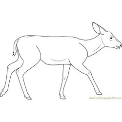 Mule Deer Free Coloring Page for Kids