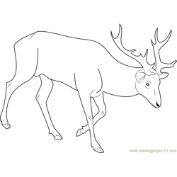 Red Deer Free Coloring Page for Kids