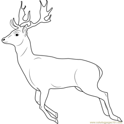 Running Deer Free Coloring Page for Kids