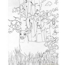 Whitetail Deer Free Coloring Page for Kids