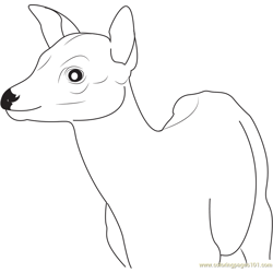 Young Deer Free Coloring Page for Kids