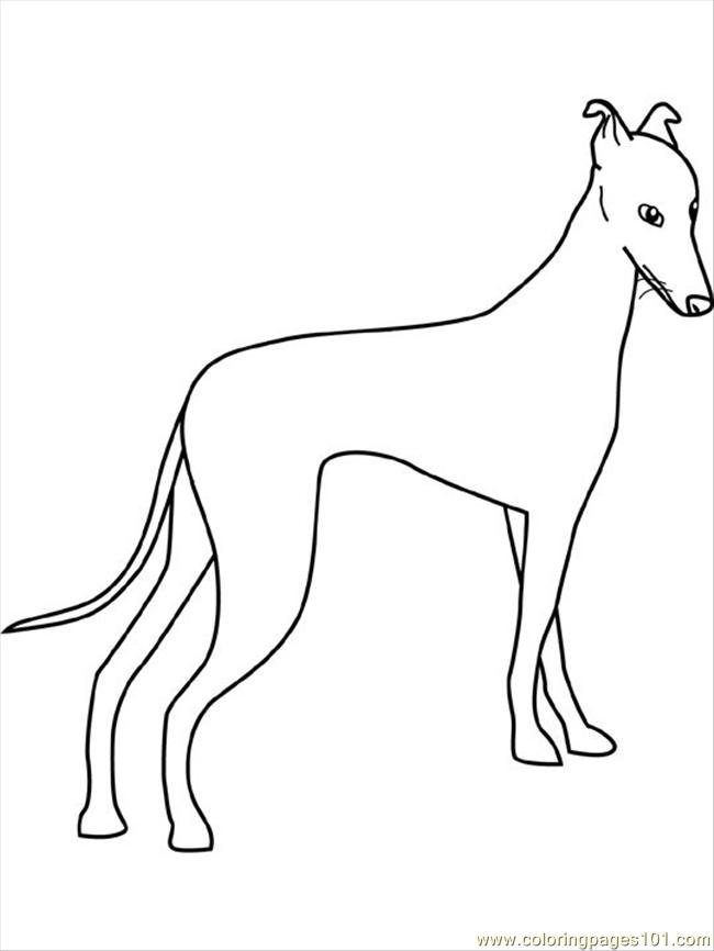 Dogs Coloring Pages Greyhound Coloring Page