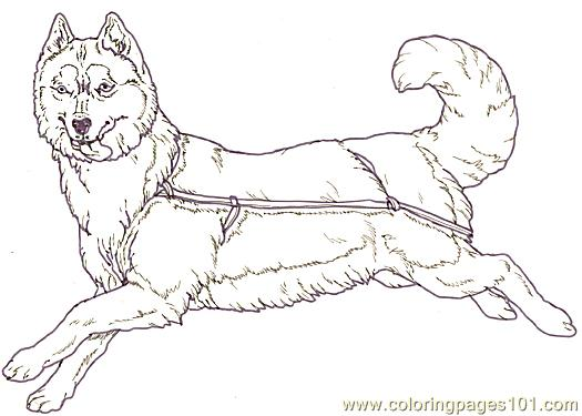Mural Tsb Sled Dog Facing Reverse Coloring Page