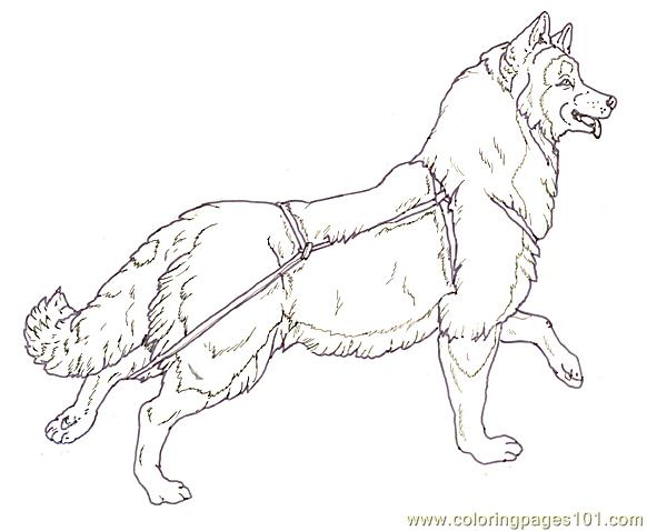 Mural Tsb Sled Dog Running Head Up Coloring Page