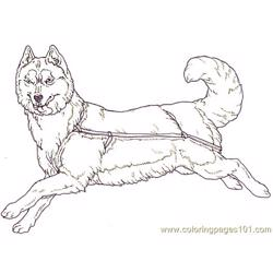 Mural Tsb Sled Dog Facing Reverse Free Coloring Page for Kids