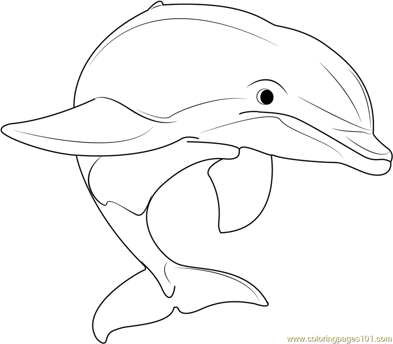 Beautiful Dolphins Coloring Page
