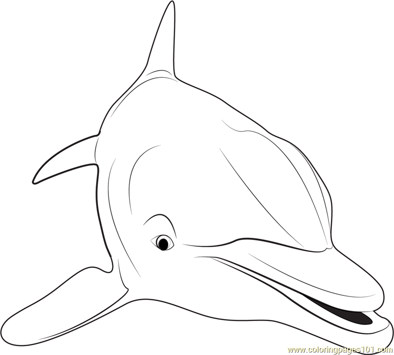 Dolphin Coloring Pages Pdf : Close up of dolphin coloring page free