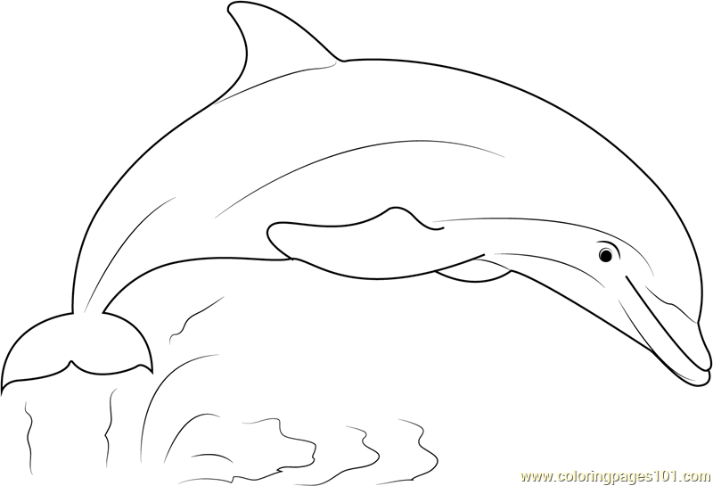 - Dolphin Show Coloring Page - Free Dolphin Coloring Pages :  ColoringPages101.com