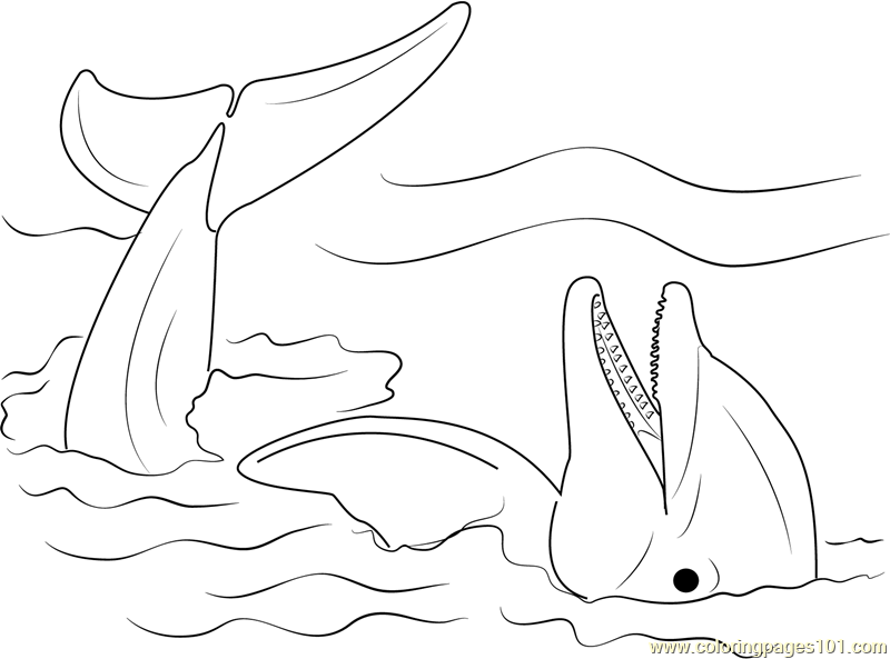 Lazy Dolphin Coloring Page