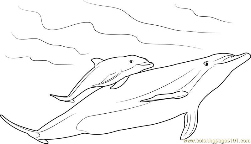 mother and baby dolphin coloring page