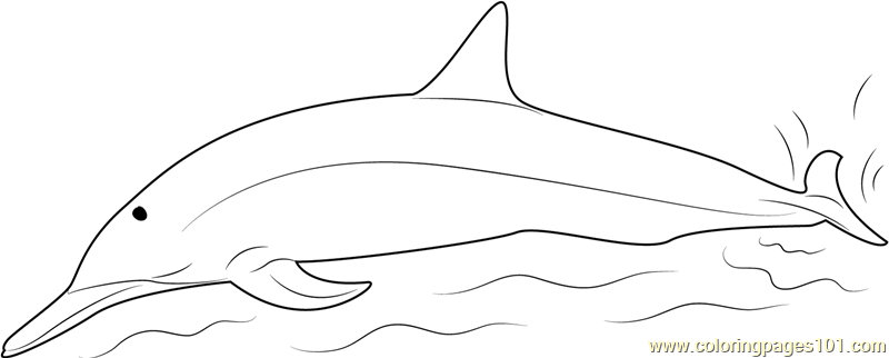 Spinner Dolphins Coloring Page Free Dolphin Coloring