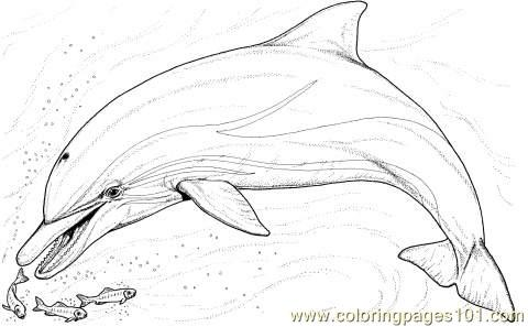 Little Fish Coloring Page Coloring Page