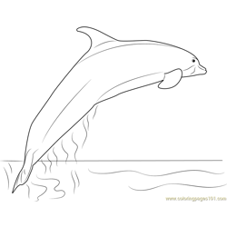 Amazon River Dolphin Free Coloring Page for Kids