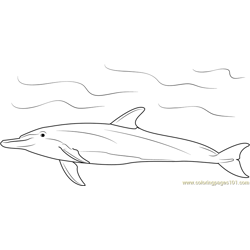 Bottlenose Dolphin Free Coloring Page for Kids