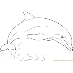 Dolphin Show Free Coloring Page for Kids