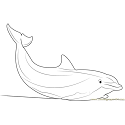 Dolphin Free Coloring Page for Kids