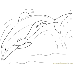 Hector Dolphin Free Coloring Page for Kids