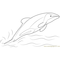 Jumping Hector Dolphin Free Coloring Page for Kids