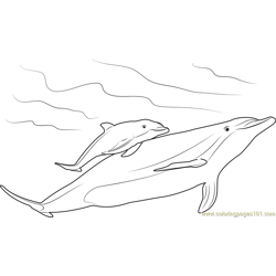 Mother and Baby Dolphin Free Coloring Page for Kids