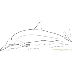 Spinner Dolphins Free Coloring Page for Kids