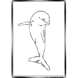 Dolphin Coloring Pages 3