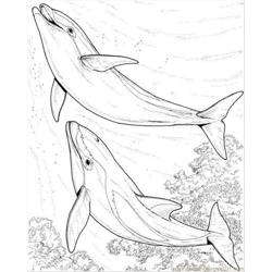 Two Dolphin Coloring Page
