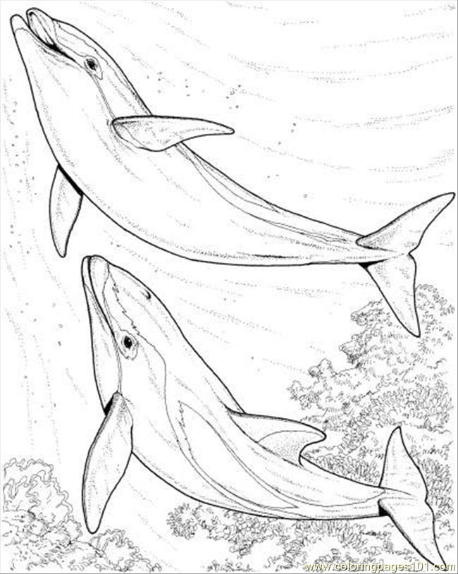 Two Dolphin Coloring Page Coloring Page - Free Dolphin Coloring ...