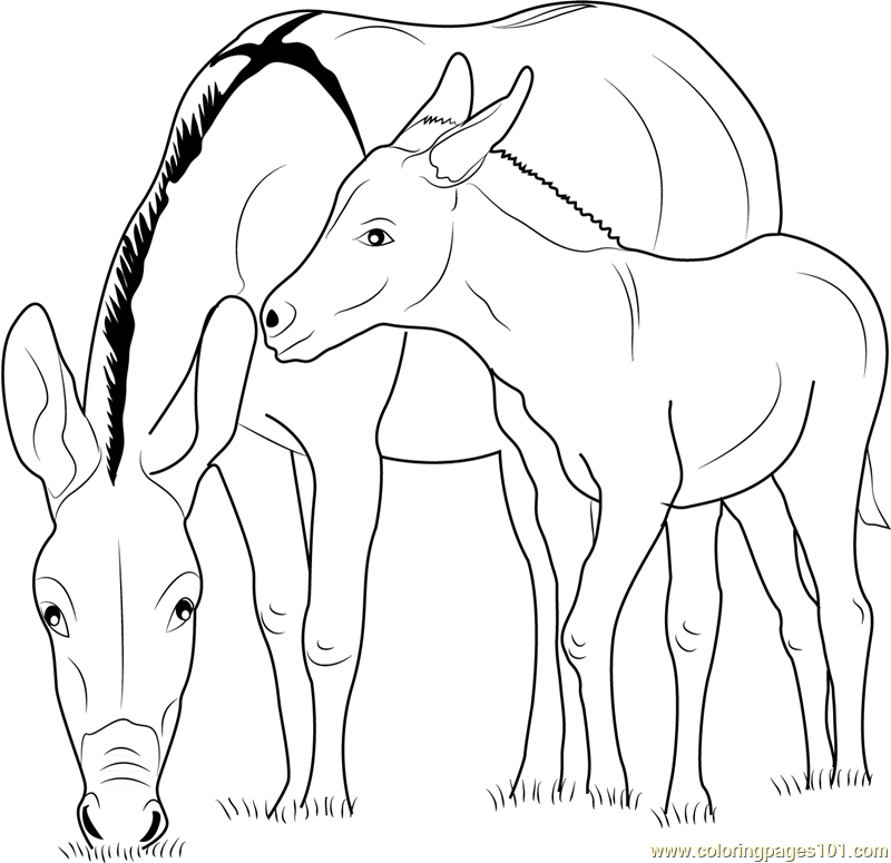 Baby zedonk with donkey mother coloring page