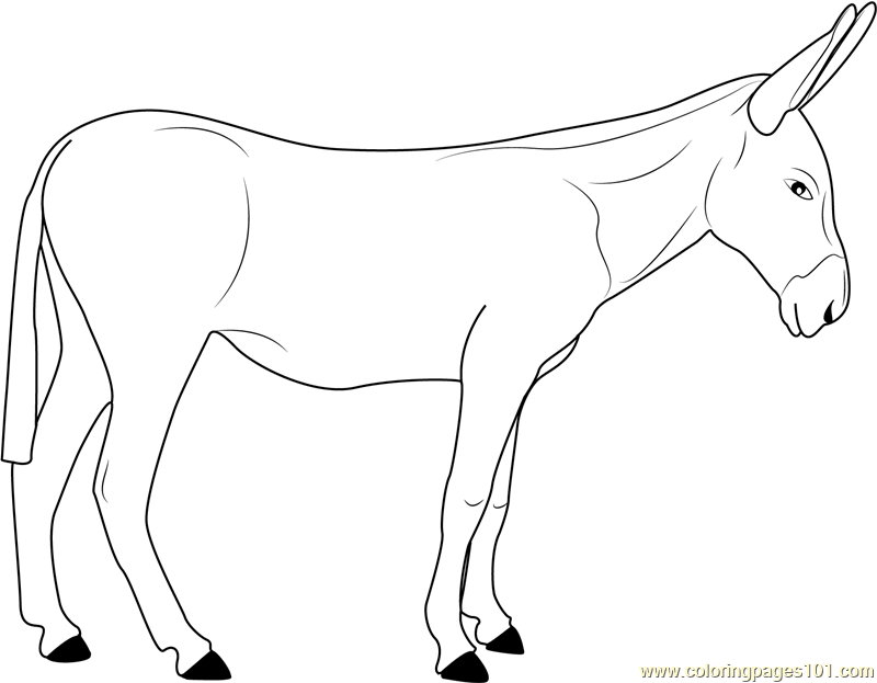 European Donkeys Coloring Page