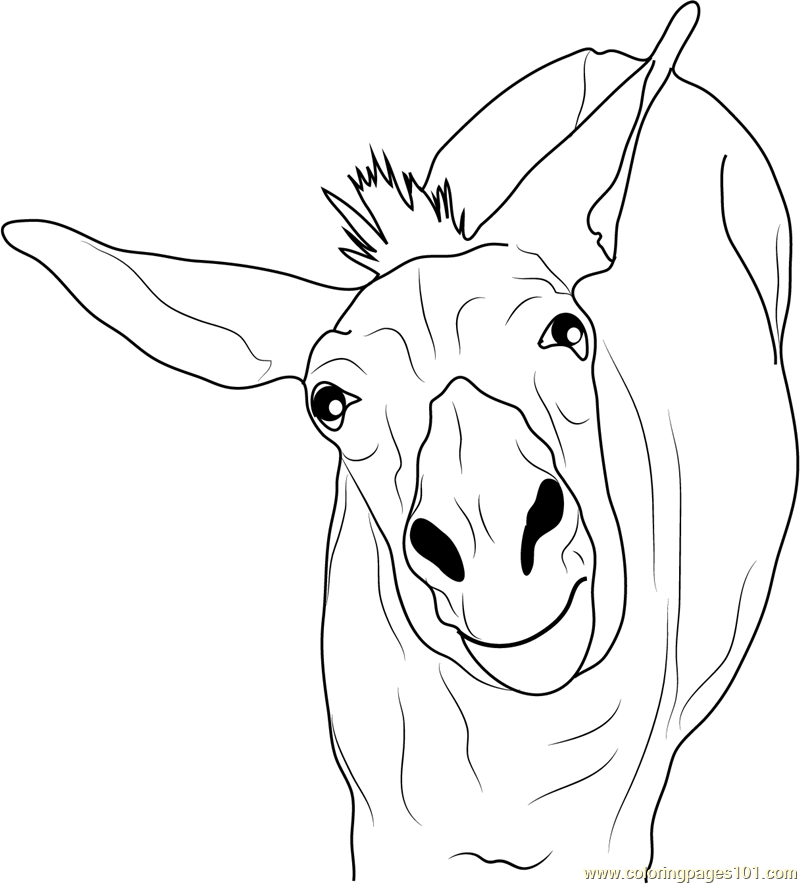 Funny Donkey Coloring Page