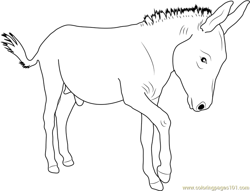 Walking Donkey Coloring Page