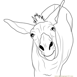 Funny Donkey Free Coloring Page for Kids
