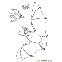 Bat Butterfly Coloring Page Source Toi