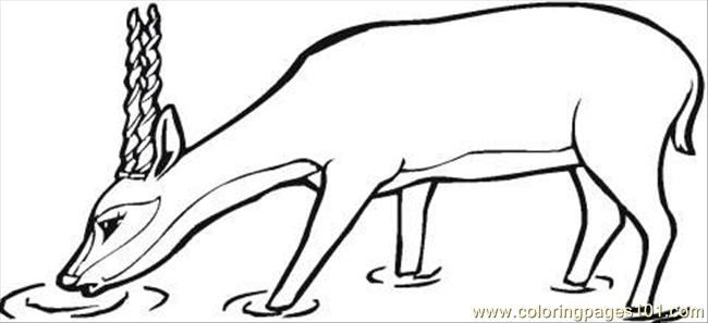 Antelope Drinks Coloring Page Coloring