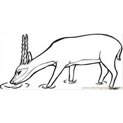 Antelope Drinks Coloring Page