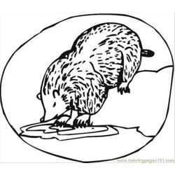 Badger Drinks Coloring Page