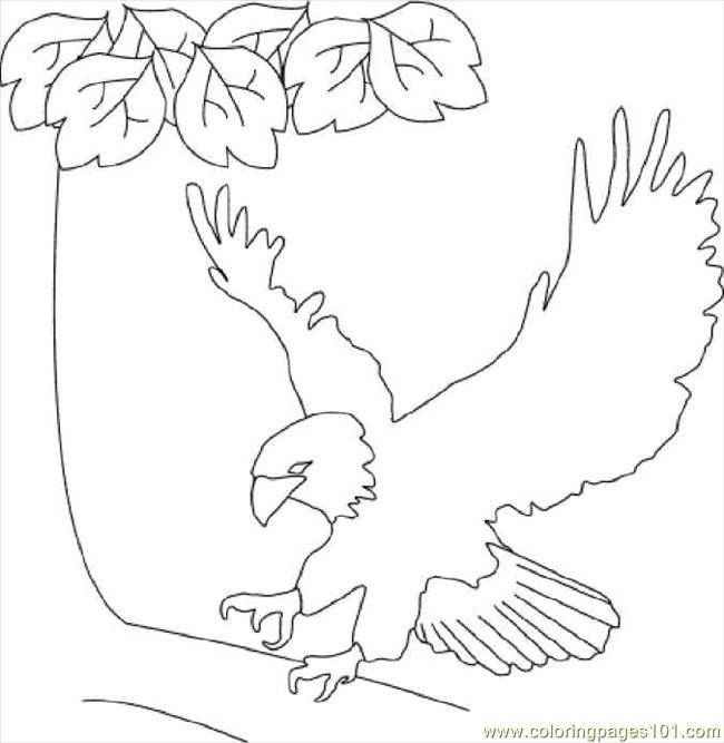 Bald Eagle Coloring Page Free Eagle Coloring Pages