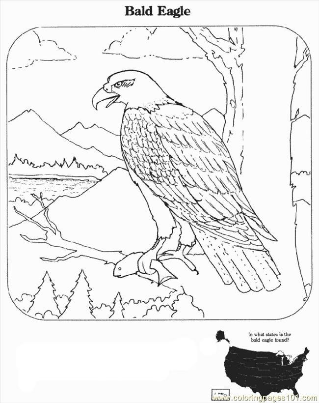 Coloring Pages Realistic Bald Eagle Coloring Coloring Pages