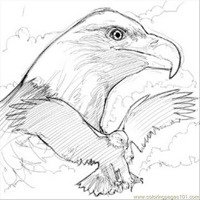 Bald eagle sketch e coloring page free eagle coloring for Bald eagle coloring pages printable