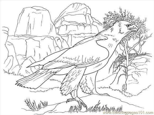 Eagle1 Coloring Page