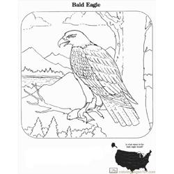 Bald Eagle Free Coloring Page for Kids